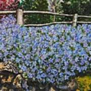 Flowers On The Rock Wall Poster