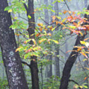 Foggy Fall Forest Poster