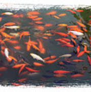 Koi Pond With Framing Poster