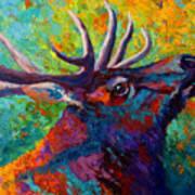 Forest Echo - Bull Elk Poster
