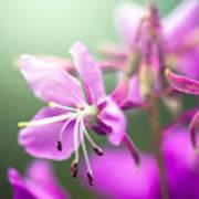 Forest Flower Poster by Adnan Bhatti