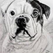 French Bull Dog Poster