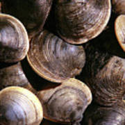 Fresh Clams Poster