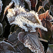 Frost-lined Poster