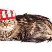 Funny Grumpy Christmas Cat Poster
