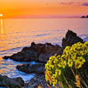 Giant Coreopsis Sunset Poster