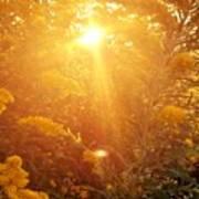 Golden Days Of Autumn Poster