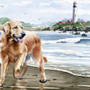 Golden Retriever At The Beach Poster