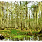 Grand Bayou Swamp  Poster