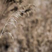 Grass Blade Poster