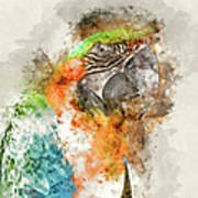 Green And Orange Macaw Bird Digital Watercolor On Photograph Poster