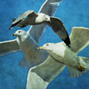 Gulls In Flight Poster