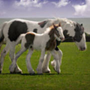 Gypsy Mare And Foal Poster