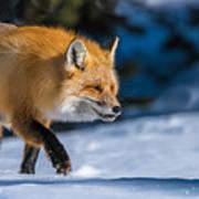 Handsome Mr. Fox Poster