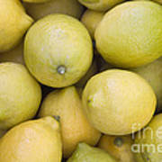 Harvested Lemons Poster