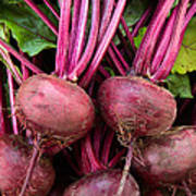 Harvested Organic Beets Poster