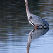 Heron Reflection Poster