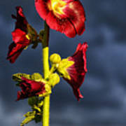 Hollyhock And Storm Clouds Poster