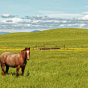 Horse Grazing Poster