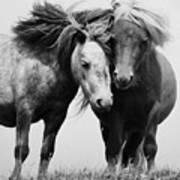 Horses 2 Poster