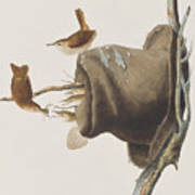 House Wren Poster