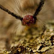 Hungry Caterpillar Poster