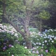 Hydrangea Flowers  Poster