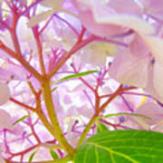 Hydrangeas Flowers Art Prints Hydrangea Art Giclee Baslee Troutman Poster