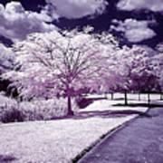 Infrared Garden Poster