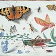 Insects And Garden Pansy Poster