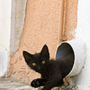 Kitten In A Pipe Poster