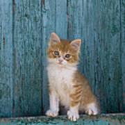 Kitten On A Greek Island Poster