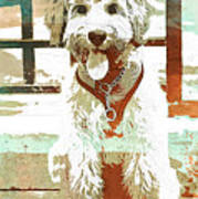Labradoodle-wc 2 Poster