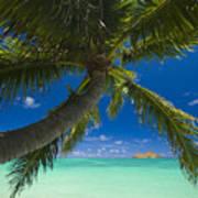 Lanikai Palm Tree Poster