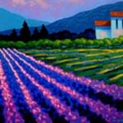 Lavender Field France Poster
