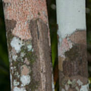 Lichen On The Trees At The Coba Ruins  Poster