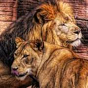 Lion Mates Poster