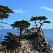 Lone Cypress Poster