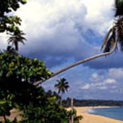 Los Tubos Beach Poster