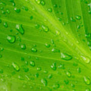 Macro Closeup Of Waterdrops On A Leaf Poster