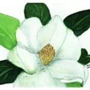 Magnolia II Poster