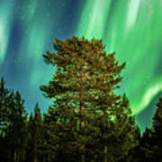 Majestic Tree Under The Northern Lights Karasjok Norway Poster