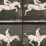 Man And Horse Jumping A Fence Poster