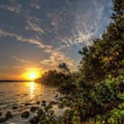 Mangrove Sunrise Poster