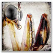 Mantis 11 Poster