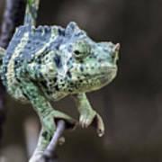 Mellers Chameleon Portrait Poster