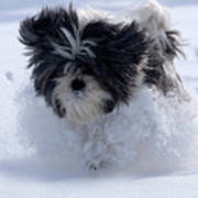 Misty Runs Through The Snow Poster