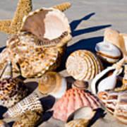 Mix Group Of Seashells Poster