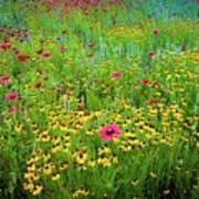 Mixed Wildflowers In Bloom Poster