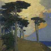 Monterey Cypress Poster